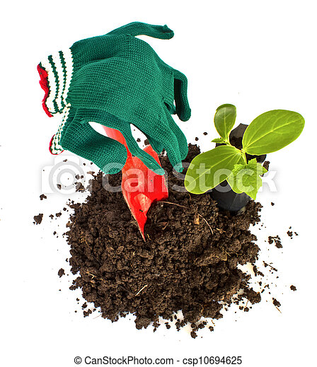 Transplant of a tree and garden tools on a white background. Concept for environment conservation - csp10694625