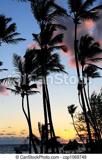 Tropical sunrise - csp1069749