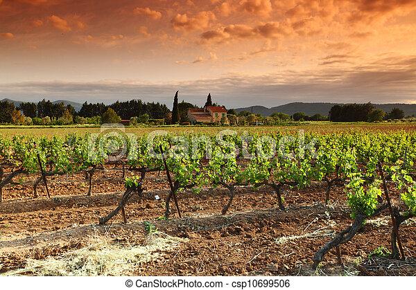 Amazing Vineyard Sunset in france - csp10699506