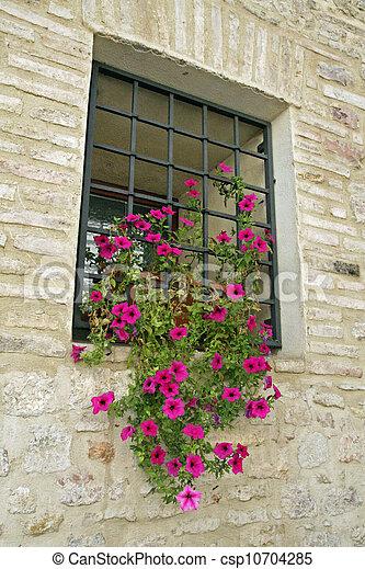 flor, Arranhão,  petunias, ferro, vaso, peitoril - csp10704285