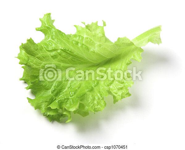 Lettuce leaf - csp1070451