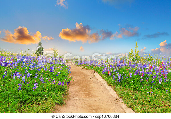 Hiking trail with wild flowers and sunset. Beautiful landscape with dreamy feel. - csp10706884