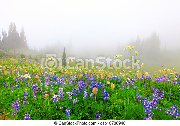 Beautiful wild flowers field with lake in the mountains with trees. - csp10706940