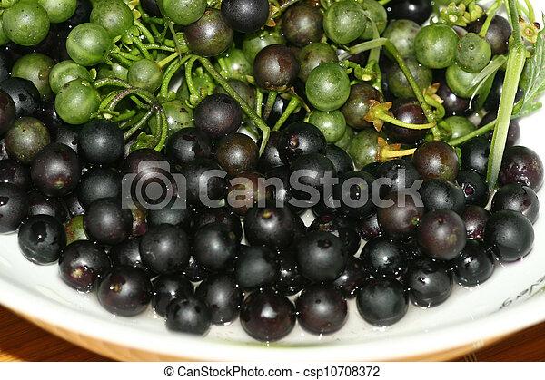 Solanum Nigrum Fruit Solanum Nigrum Fruit