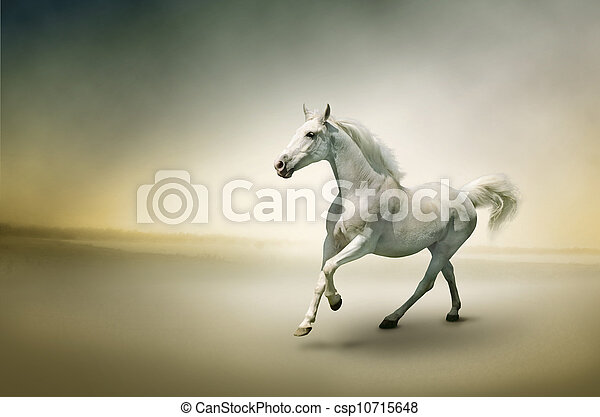 White horse in motion  - csp10715648