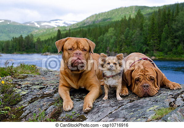 Three dogs at the mountain river bank, Norway - csp10716916