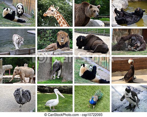 Different wild animals together - photo#10