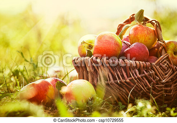 Organic apples in summer grass - csp10729555