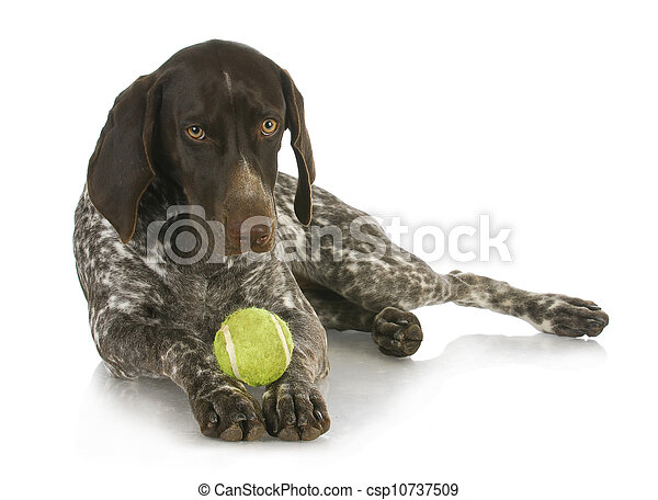 dog with a ball - csp10737509