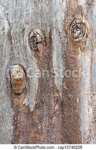 eucalipto, árvore, tronco - csp10740228