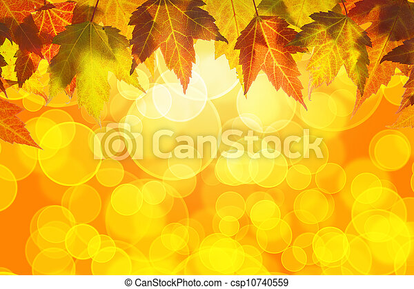 Hanging Fall Maple Tree Leaves Background - csp10740559