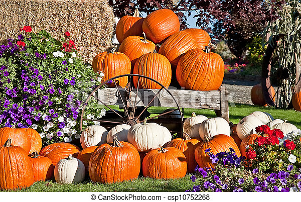 White and Orange Pumpkin Fall Still Life - csp10752268