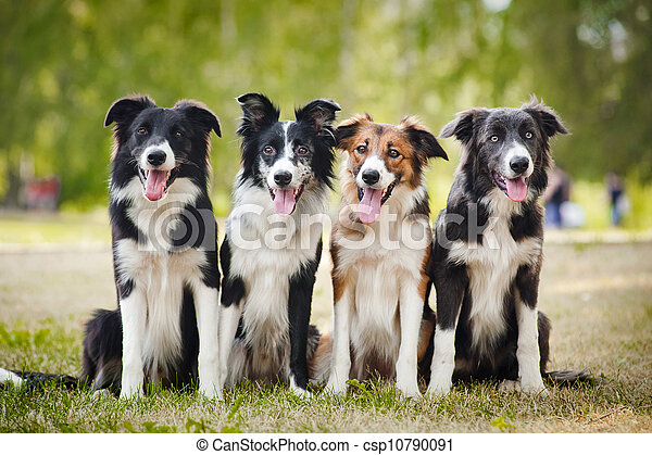 group of happy dogs sittingon the grass - csp10790091