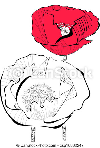 Stylized Poppy flower illustration - csp10802247