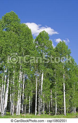 Aspen Grove - csp10802551