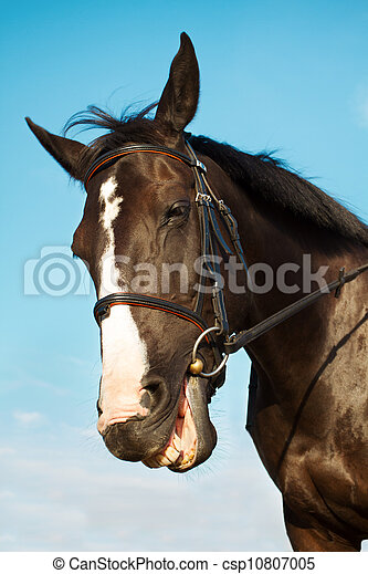 Funny horse head smiling over blue sky background - csp10807005