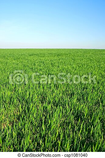 green grass on horzon with blue sky    green grass on horzon wit - csp1081040