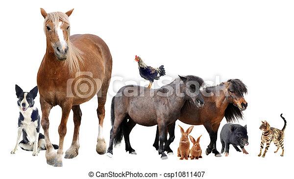 farm animals - csp10811407