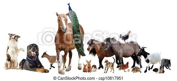 farm animals - csp10817951
