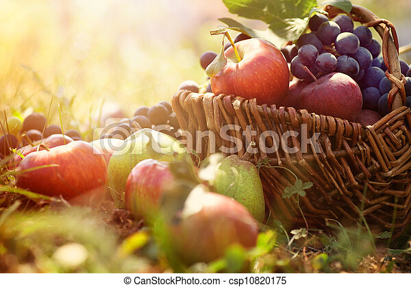 Organic fruit in summer grass - csp10820175