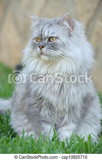 Happy cat portrait