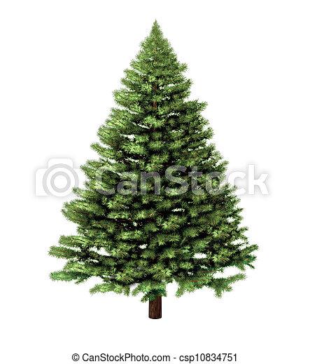 樹, 聖誕節 - csp10834751