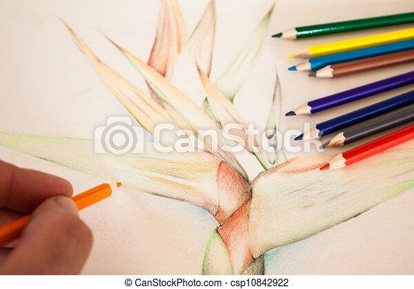 Clip art de crayon couleur main strelitzia dessin - Main dessin crayon ...