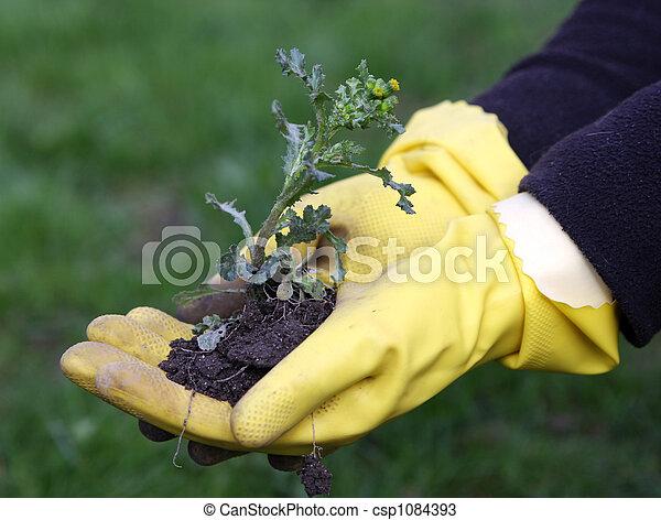 weeds in the garden - csp1084393