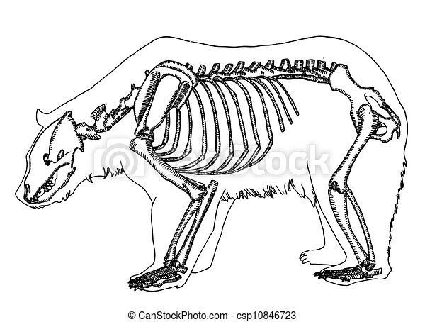 Blank Horse Diagram also Horse Lapbook furthermore Item81714557 moreover 13 additionally Male Reproductive System Diagrams Without Labels. on labeled horse diagram