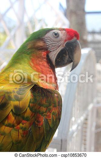 Colorful parakeet