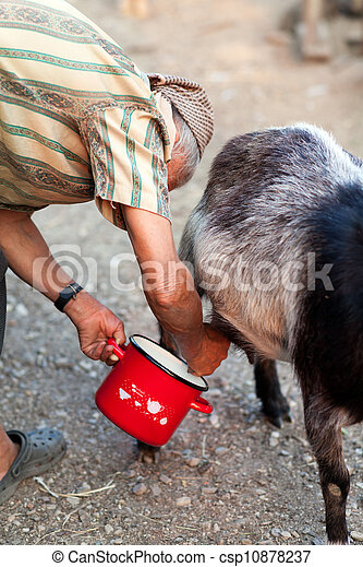 Senior woman milking goat - csp10878237