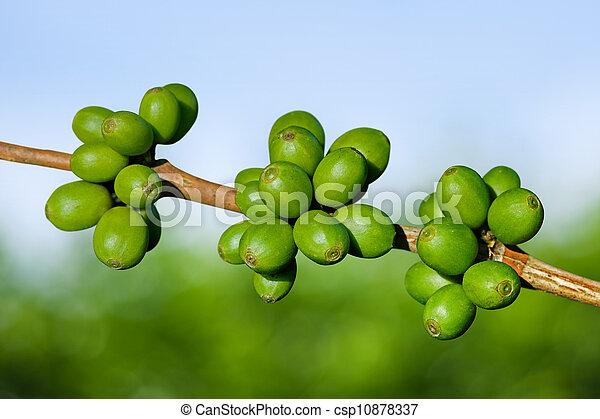 Green coffee beans - csp10878337