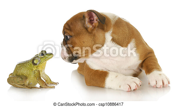 cute puppy with bullfrog - csp10886417