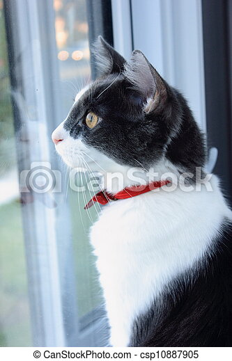Cat on the Window Sill - csp10887905