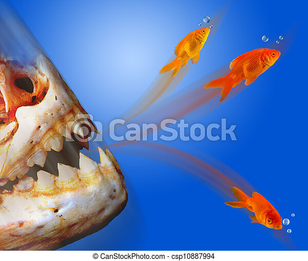 Banque de photographies de poisson rouge s 39 chapper for Tarif poisson rouge