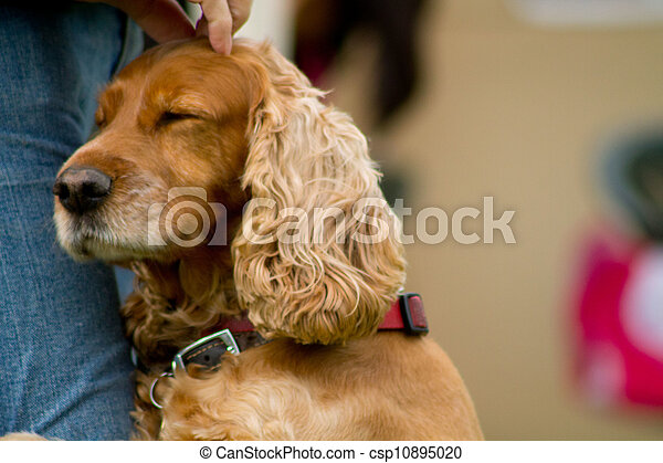 dog showing affection to human whilst being stroked.