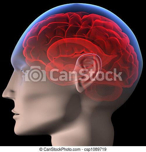 Brain - csp1089719
