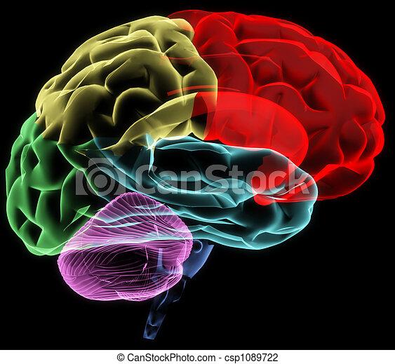 Brain - csp1089722