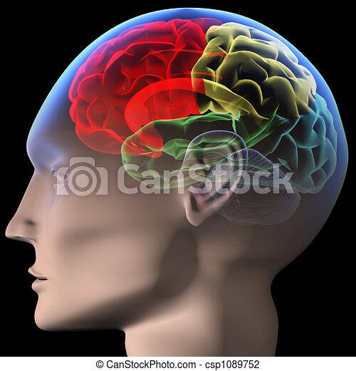 cerebro - csp1089752