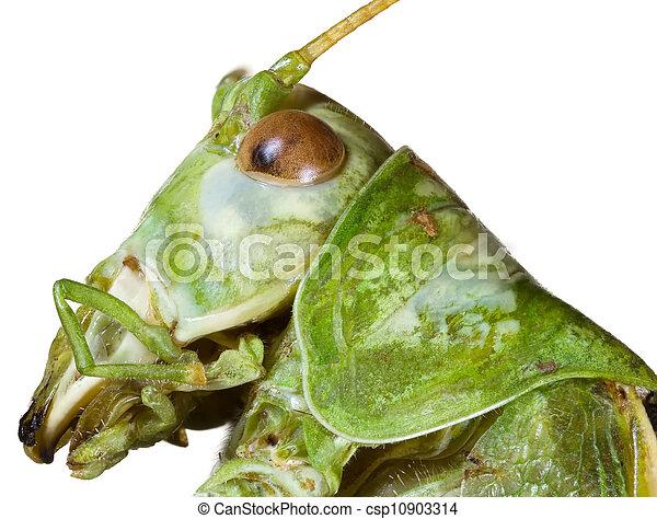 Locust Head Cutout - csp10903314