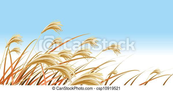Grass Blades against Blue sky  - csp10919521