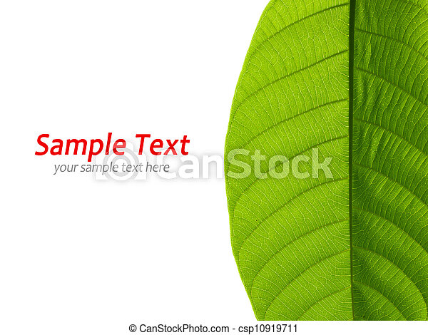 Green leaf on white - csp10919711