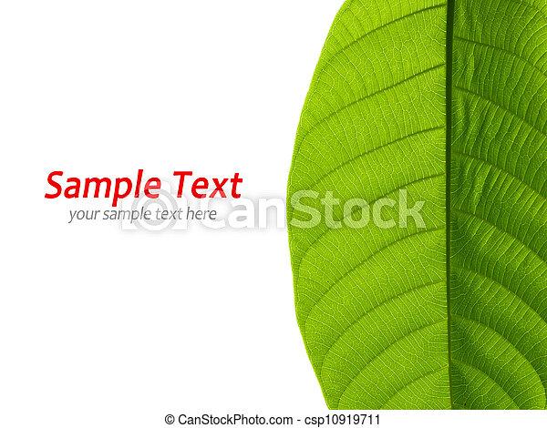 Green leaf on white - csp10919711