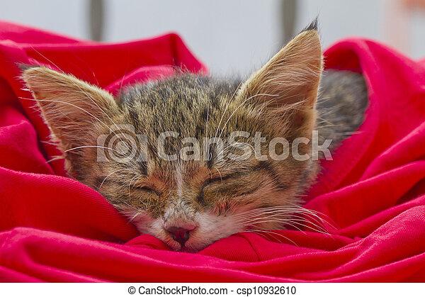 Cat - csp10932610