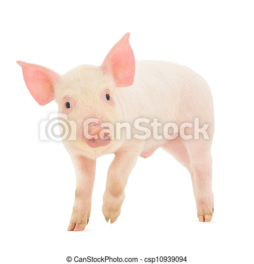 Pig on white - csp10939094