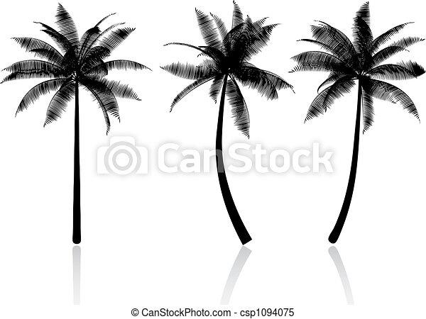 palm trees - csp1094075