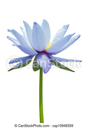 Water lily isolated on white - csp10948359