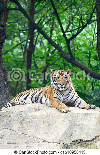 tigre, natural, su, habitat - csp10950413
