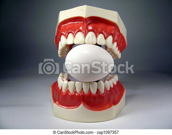 teeth model - csp1097357