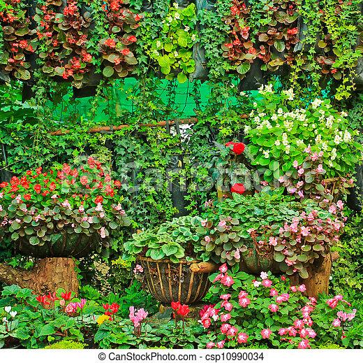 Beautiful flowers - csp10990034